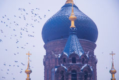 Saint Sophia Cathedral and Pigeons Stock Photography