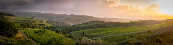 Landscape in the middle of Tuscany. The saint of tuscany, one of the many sanctuaries of the roads that cross it in the middle of the road crossing the vineyard royalty free stock images