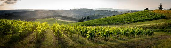 Landscape in the middle of Tuscany. The saint of tuscany, one of the many sanctuaries of the roads that cross it in the middle of the road crossing the vineyard royalty free stock image