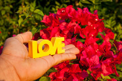 Saint-Valentin de couleur de main d'amour de fond de fleur Images stock