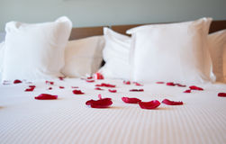 Saint valentine's day, white large bed with the rose petals Stock Photography
