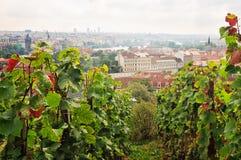 Saint Wenceslas Vineyard Prague stock photography