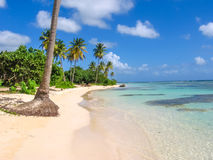 Sainte-Anne Guadeloupe. Coconut palms, turquoise sea and white sandy beach of Sainte-Anne Guadeloupe, Antilles, Caribbean royalty free stock photography