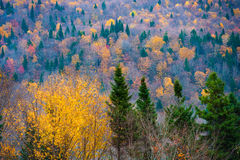 Sainte-Brigitte-de-Laval, Quebec, Canada. Bright Colours of Fall, Sainte-Brigitte-de-Laval, Quebec, Canada Stock Images