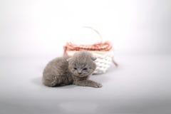 Sair dos gatinhos de uma cesta Fotos de Stock