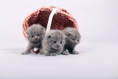 Sair dos gatinhos de uma cesta Fotos de Stock Royalty Free