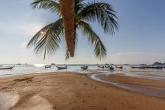 Sairee Beach palm tree and taxi boats Royalty Free Stock Image