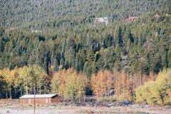 Saison changeant de l'automne en l'hiver Photographie stock