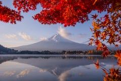 Saison colorée d'automne chez Kawaguchiko au Japon image libre de droits