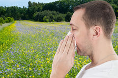 Saison d'allergie Image stock