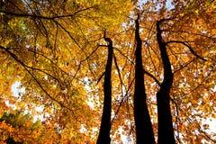 Saison d'automne Images libres de droits