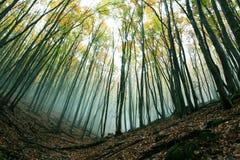 Saison d'automne photos stock