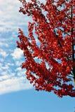 Saison d'automne Photo stock
