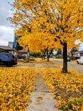 Saison d'automne avec les feuilles d'érable sèches sur le trottoir au Canada photo stock