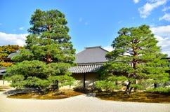 Saison d'automne de forêt d'érable au Japon Photographie stock libre de droits