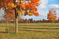 Saison d'automne en parc Photo libre de droits