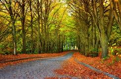 Saison d'automne en stationnement Image libre de droits
