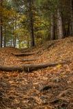 Saison d'automne sur le volcan de l'Etna photo stock