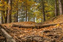 Saison d'automne sur le volcan de l'Etna photographie stock