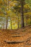Saison d'automne sur le volcan de l'Etna image libre de droits