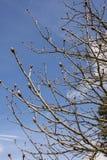Saison de bourgeons au printemps photos libres de droits