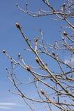Saison de bourgeons au printemps photos stock