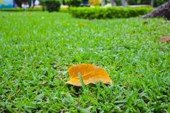 Saison de chute dans ha NOI, Vietnam Photos libres de droits