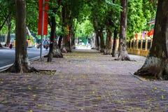 Saison de chute dans ha NOI, Vietnam images libres de droits