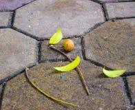 Saison de chute dans ha NOI, Vietnam images stock