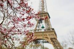 Saison de fleurs de cerisier à Paris, France image stock