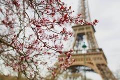 Saison de fleurs de cerisier à Paris, France photo stock