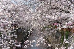 Saison de fleurs de cerisier à Tokyo à la rivière de Meguro, Japon image libre de droits