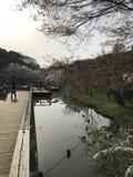 Saison de fleurs de cerisier, un symbole de culture japonaise image libre de droits