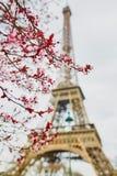 Saison de fleurs de cerisier à Paris, France images libres de droits