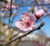 Saison de floraison 2010 Photo stock