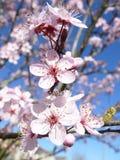 Saison de floraison 2010 Images libres de droits