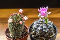 Saison de floraison Photographie stock
