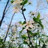 Saison de floraison Images stock