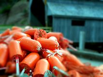 Saison de homard Photos stock
