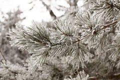 Saison de l'hiver Photo libre de droits