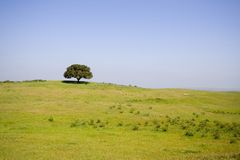 Saison de Lanscape au printemps Photographie stock libre de droits