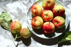 Saison de pommes Image stock