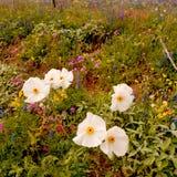 Saison de Wildflower Photographie stock libre de droits