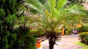 Saison des pluies dans la région tropicale Palmier dedans clips vidéos