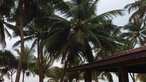Saison des pluies en Asie, paysage d'océan après pluie, longtemps vieillissant, soirée élevée, goa de l'Inde de lumières banque de vidéos