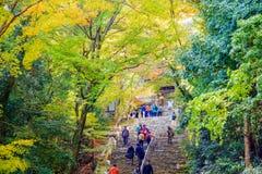 Saison gentille d'érable, Japon Image stock