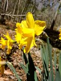 Saison-Neu-England Schönheit Lizenzfreie Stockfotografie