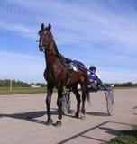 Saison professionnelle de char d'or d'essai de piste de Novosibirsk de races de trot de chevaux de concours 2013 septembre Novosi photos libres de droits