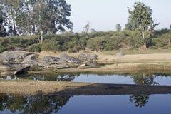 Saison sèche dans Kanha Images stock