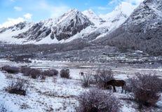 Saison stupéfiante d'hiver à la réserve naturelle de Yading dans Sichuan, la Chine images stock